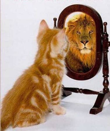 self worth - cat and lion